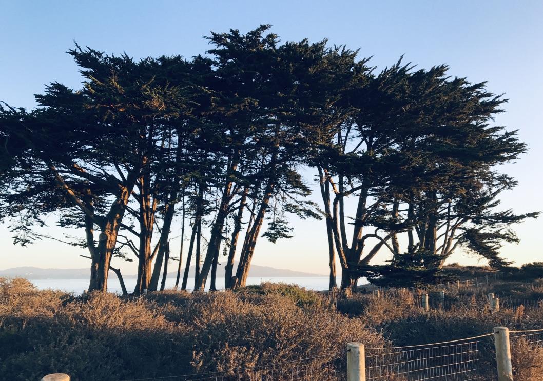 Paysage de San Francisco