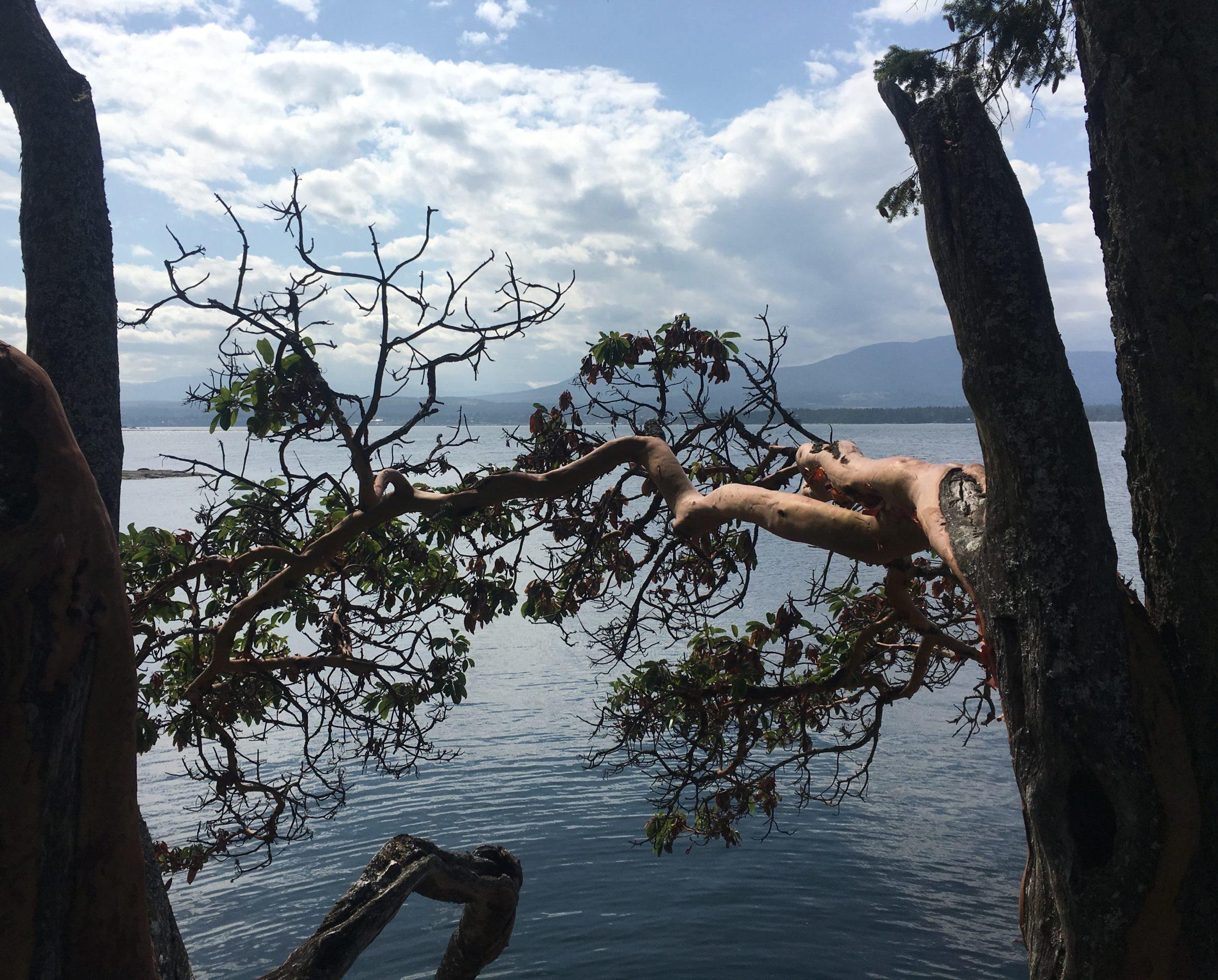 """Un petit moment de tranquillité à """"the Haven"""" sur l'île de Gabriola en Colombie-Britannique, Canada"""